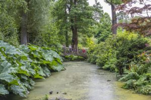 Winterbourne's Japanese Bridge and Water Lily Pond